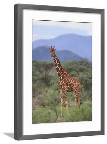 Giraffe-DLILLC-Framed Art Print