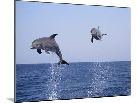 Dolphin Breaching the Oceans Surface-DLILLC-Mounted Photographic Print