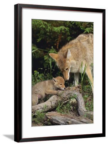 Coyote and Her Pup-DLILLC-Framed Art Print
