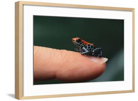 Dendrobates Reticulatus-DLILLC-Framed Art Print