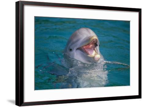 Bottle-Nosed Dolphin-DLILLC-Framed Art Print