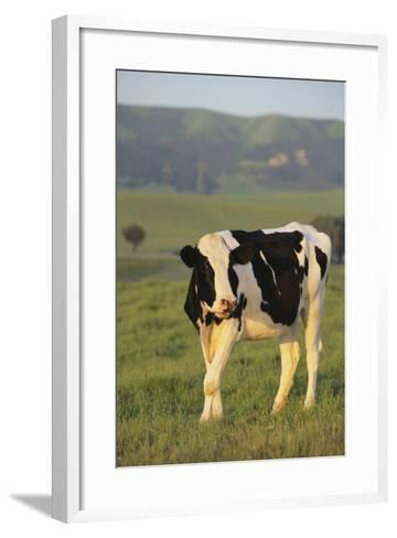 Holstein Cow-DLILLC-Framed Art Print