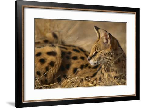 African Serval-DLILLC-Framed Art Print