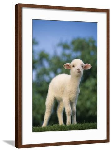 Lamb in Grass-DLILLC-Framed Art Print