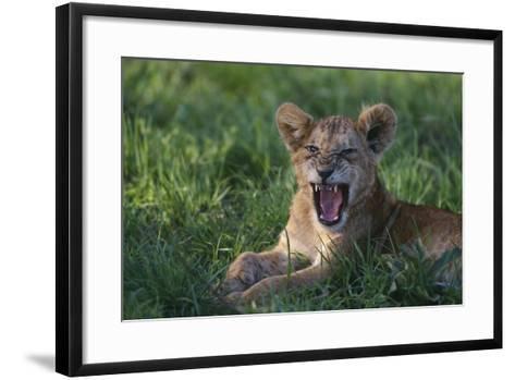 Lion Cub Snarling-DLILLC-Framed Art Print