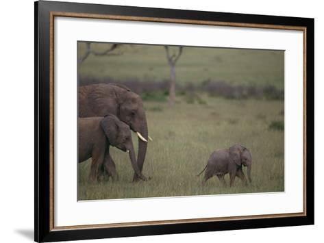Baby Elephant Taking the Lead-DLILLC-Framed Art Print