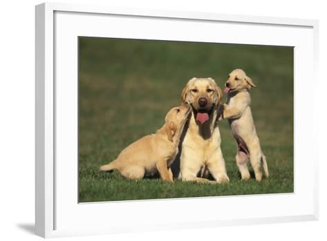 Yellow Lab Mother and Puppies-DLILLC-Framed Art Print