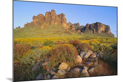 Wildflowers in the Desert-DLILLC-Mounted Photographic Print