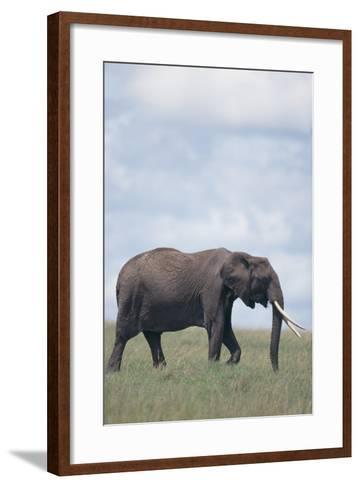 Elephant-DLILLC-Framed Art Print