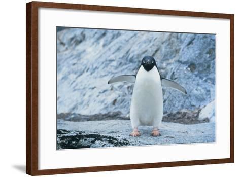 Fearless Adelie Penguin-DLILLC-Framed Art Print