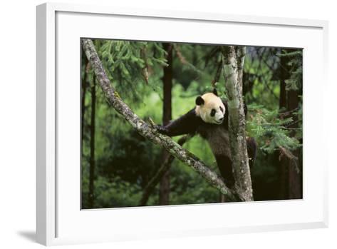 Giant Panda in the Forest-DLILLC-Framed Art Print