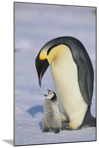 Emperor Penguins and Offspring-DLILLC-Mounted Photographic Print