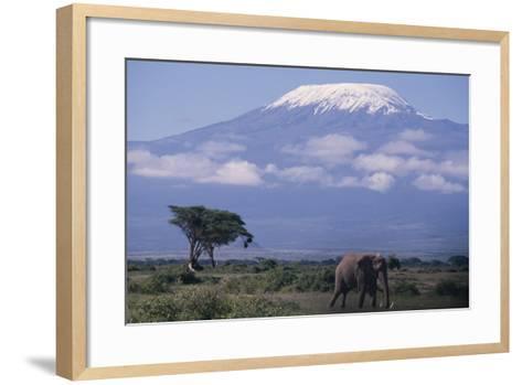 Adult Elephant-DLILLC-Framed Art Print