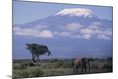 Adult Elephant-DLILLC-Mounted Photographic Print