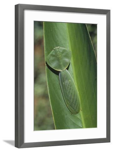Leaf Mantis Camouflaged on a Leaf-DLILLC-Framed Art Print