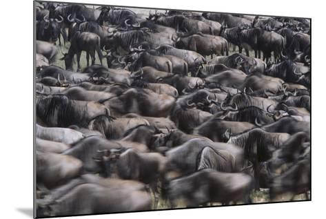 Wildebeest-DLILLC-Mounted Photographic Print