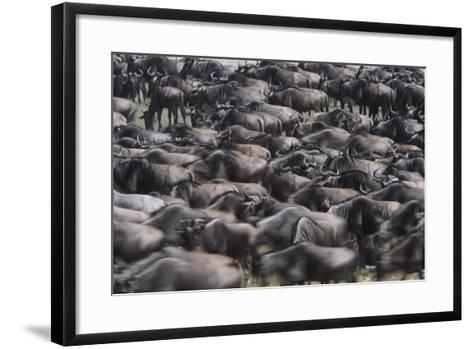 Wildebeest-DLILLC-Framed Art Print