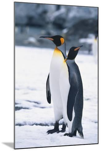 King Penguins Looking in Different Directions-DLILLC-Mounted Photographic Print
