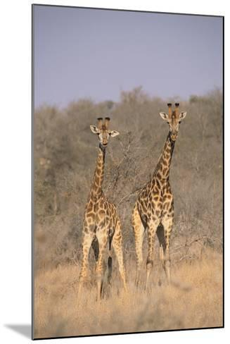 Two Giraffes Standing in the Bush-DLILLC-Mounted Photographic Print