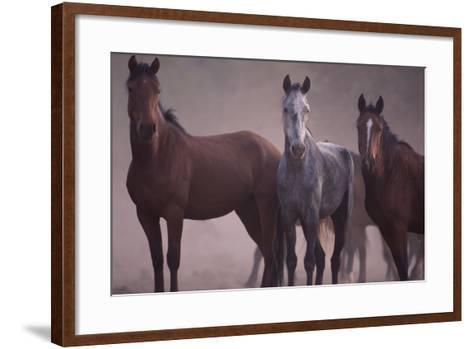 Quarter Horses-DLILLC-Framed Art Print
