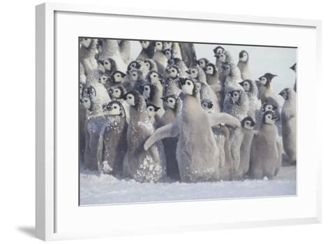 Young Emperor Penguins Covered in Snow-DLILLC-Framed Art Print