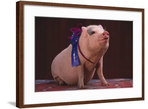 Prize-Winning Pig-DLILLC-Framed Art Print