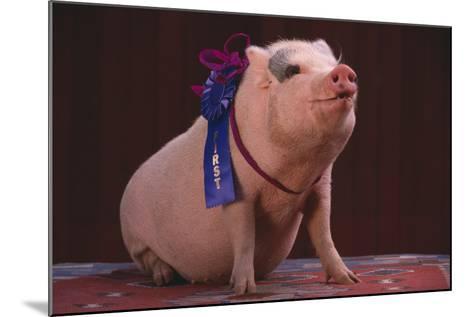 Prize-Winning Pig-DLILLC-Mounted Photographic Print