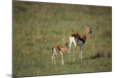 Thomson's Gazelle and Young-DLILLC-Mounted Photographic Print