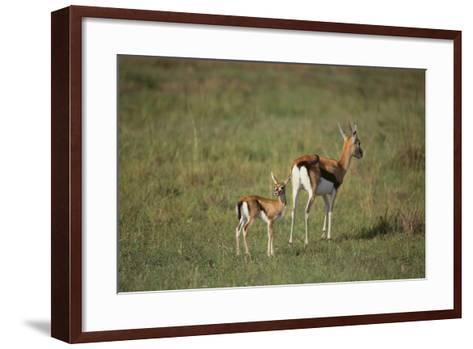 Thomson's Gazelle and Young-DLILLC-Framed Art Print