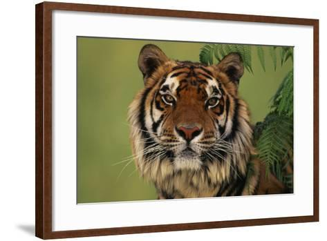 Tiger Sitting under Fern Leaves-DLILLC-Framed Art Print