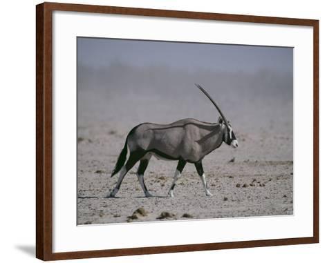 Oryx Gazella Beisa-DLILLC-Framed Art Print