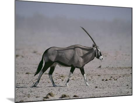 Oryx Gazella Beisa-DLILLC-Mounted Photographic Print