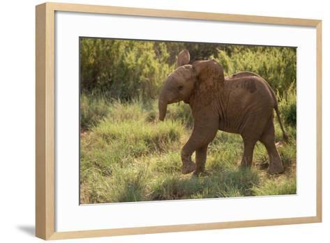 Baby Elephant Flaring its Ears-DLILLC-Framed Art Print
