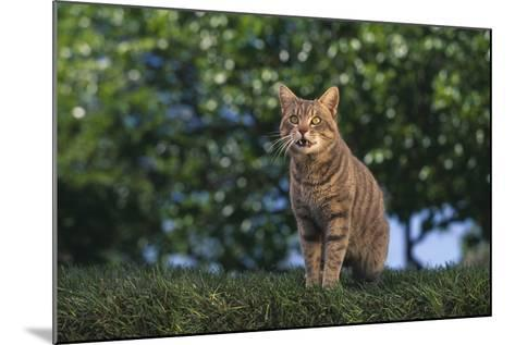 Tabby Cat on Grass-DLILLC-Mounted Photographic Print