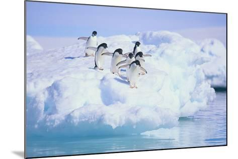 Adelie Penguins-DLILLC-Mounted Photographic Print