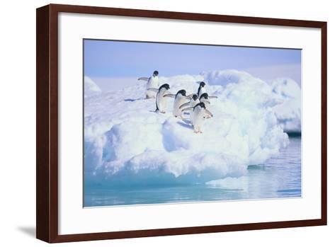 Adelie Penguins-DLILLC-Framed Art Print