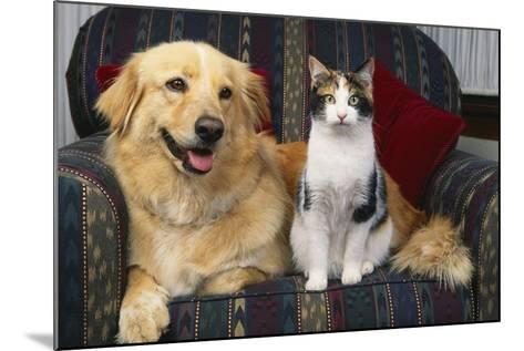 Cat and Dog Sitting Together-DLILLC-Mounted Photographic Print