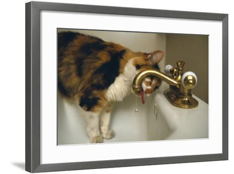 Calico Cat Drinking from Faucet-DLILLC-Framed Art Print
