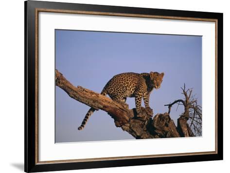 Leopard Climbing Tree-DLILLC-Framed Art Print