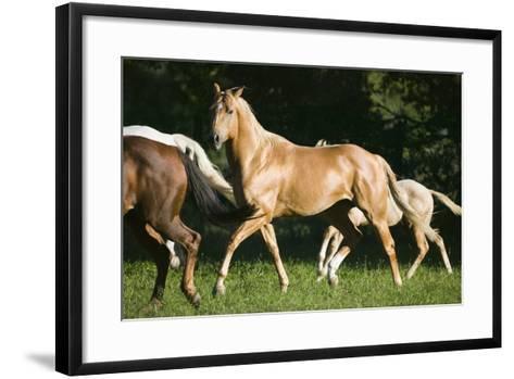 Palomino Stallion-DLILLC-Framed Art Print