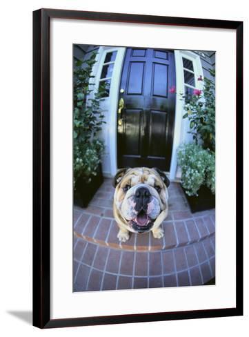 English Bulldog-DLILLC-Framed Art Print