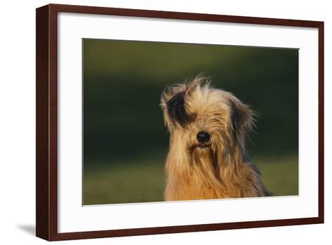 Mongrel Dog-DLILLC-Framed Art Print