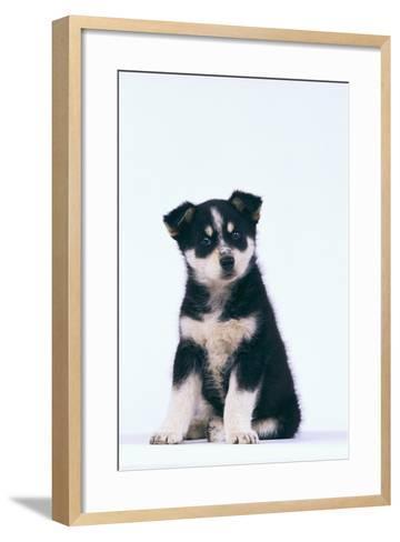 Husky Puppy-DLILLC-Framed Art Print