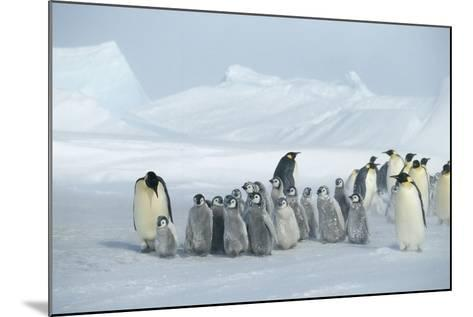 Emperor Penguins on Ice-DLILLC-Mounted Photographic Print