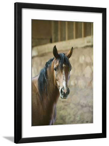 Quarter Horse with Blaze Marking-DLILLC-Framed Art Print