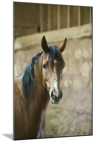 Quarter Horse with Blaze Marking-DLILLC-Mounted Photographic Print