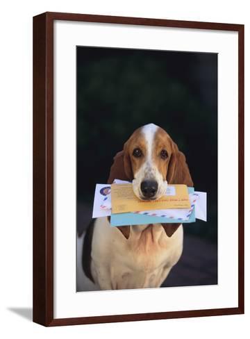 Basset Hound Fetching the Mail-DLILLC-Framed Art Print