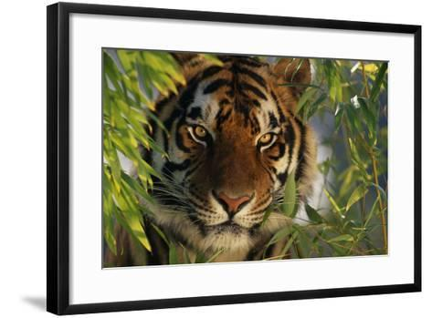 Tiger Sitting among Bamboo Leaves-DLILLC-Framed Art Print