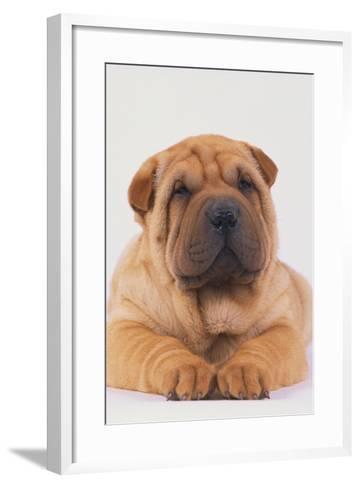 Shar-Pei-DLILLC-Framed Art Print