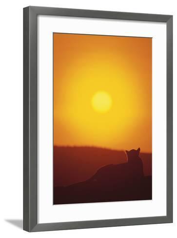 Lion at Sunset-DLILLC-Framed Art Print